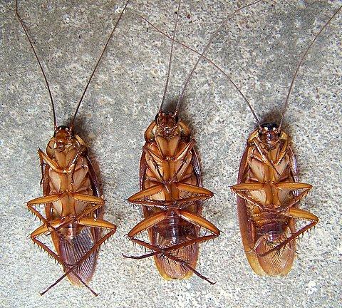 3-dead-cockroaches.jpg