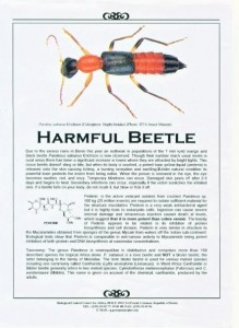 Harmful Beetle